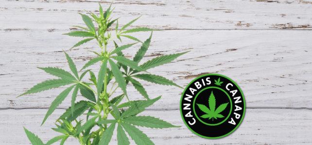 Cannabis e Canapa quando una legge crea dibattito.